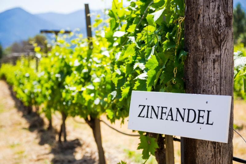 California Zinfandel Wine Tasting
