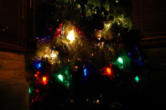 christmas tree trimmed with lights