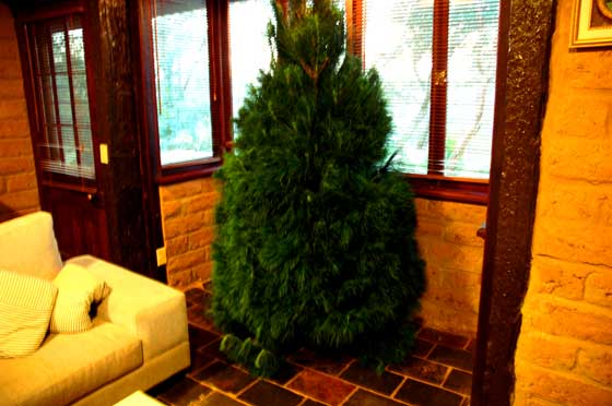 Christmas tree undecorated