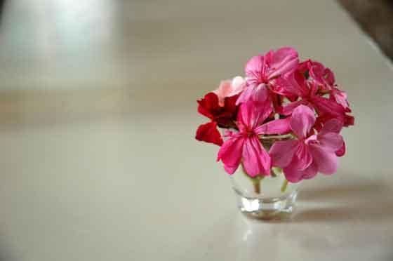 flowers from lovely little friends