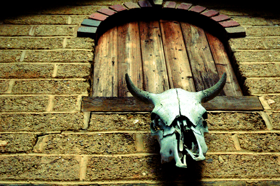 exterior deocrating - filing found items - a steers skull on the barn