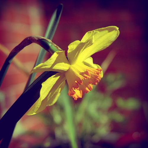 august-10-spring_500px.jpg