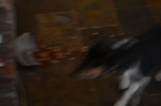blurry photo of dog
