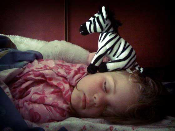 sleeping with zebra