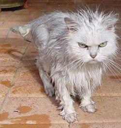 grumpy.jpeg