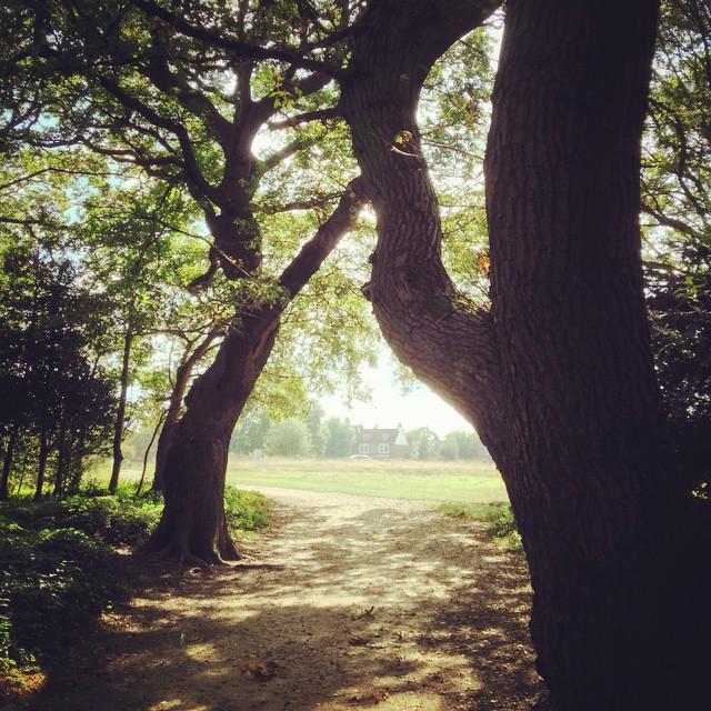 Through the #trees