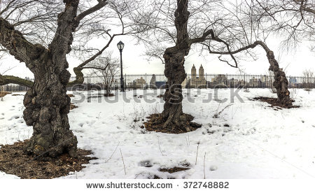 stock-photo-central-park-new-york-city-cherry-trees-in-winter-372748882.jpg