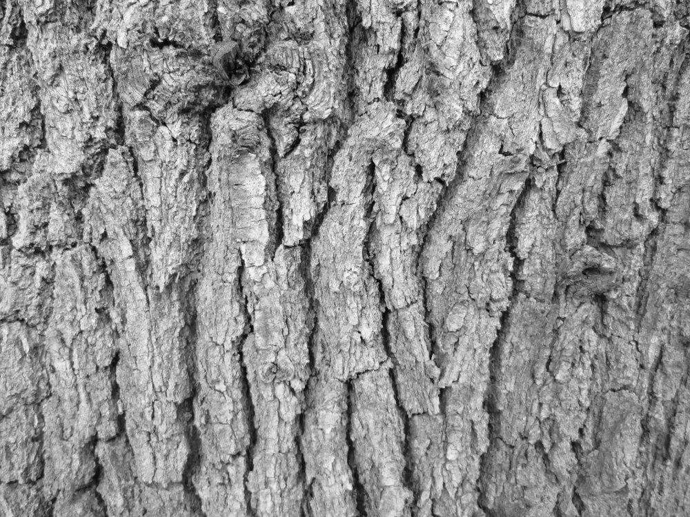 tree-bark-texture-14.jpg