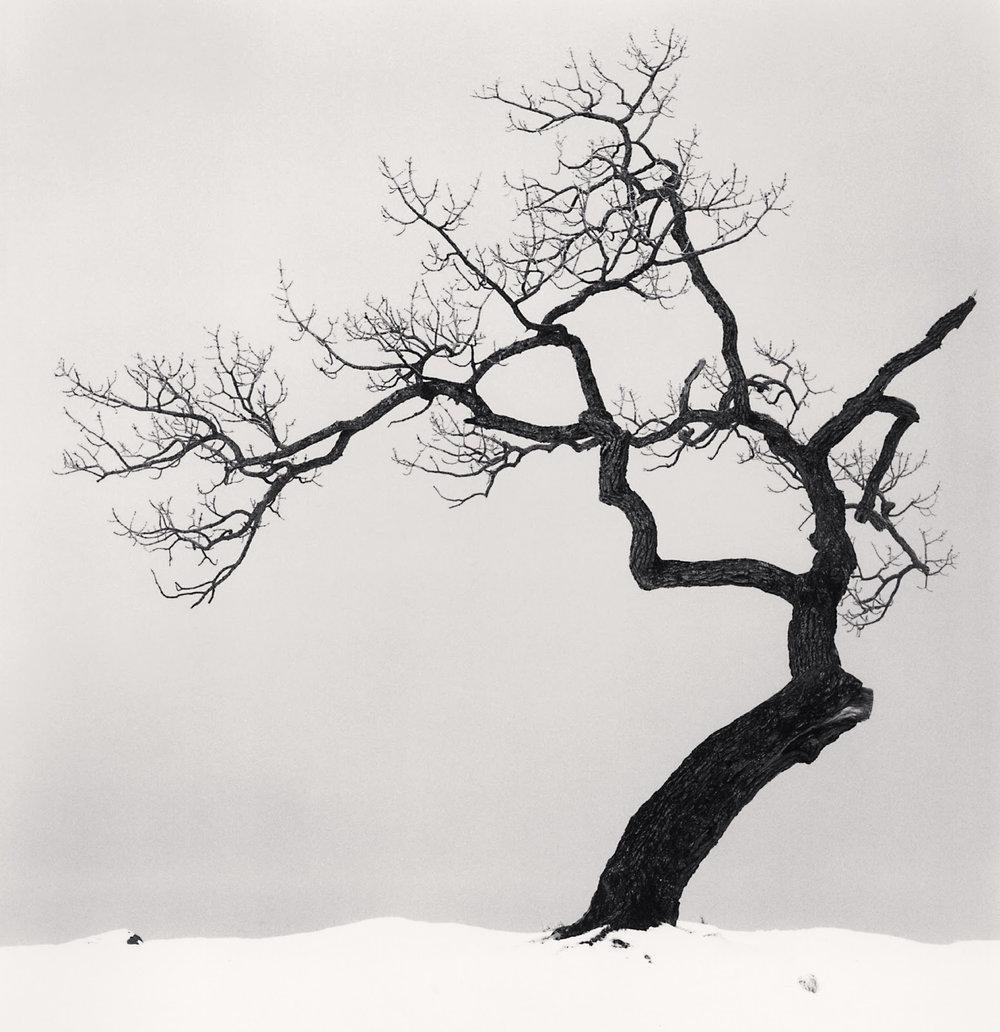 tumblr_static_kussharo_lake_tree__study_1__kotan__hokkaido__japan__2002.jpg