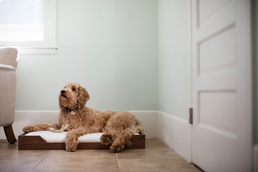 Custom wood dog bed and golden doodle