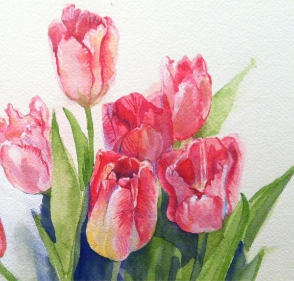 Pink Tulip Study