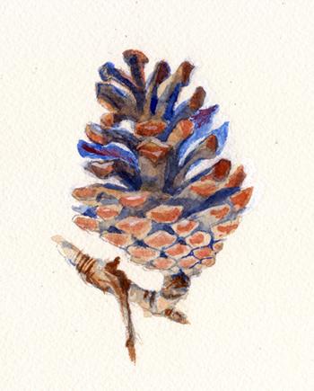 pinecone3.jpg