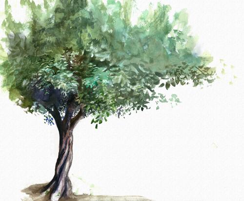 og tree scan2.jpg