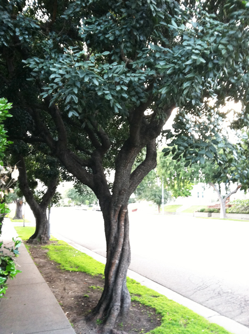 tree photo 2.jpg