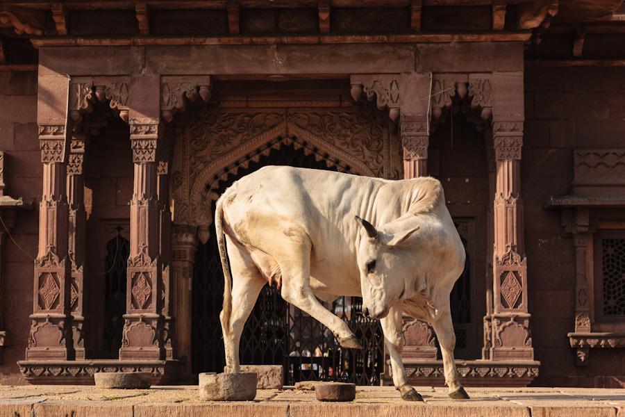 20111028_jodhpur_0062.jpg