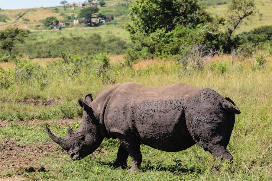 20120319_south_africa_0170.jpg