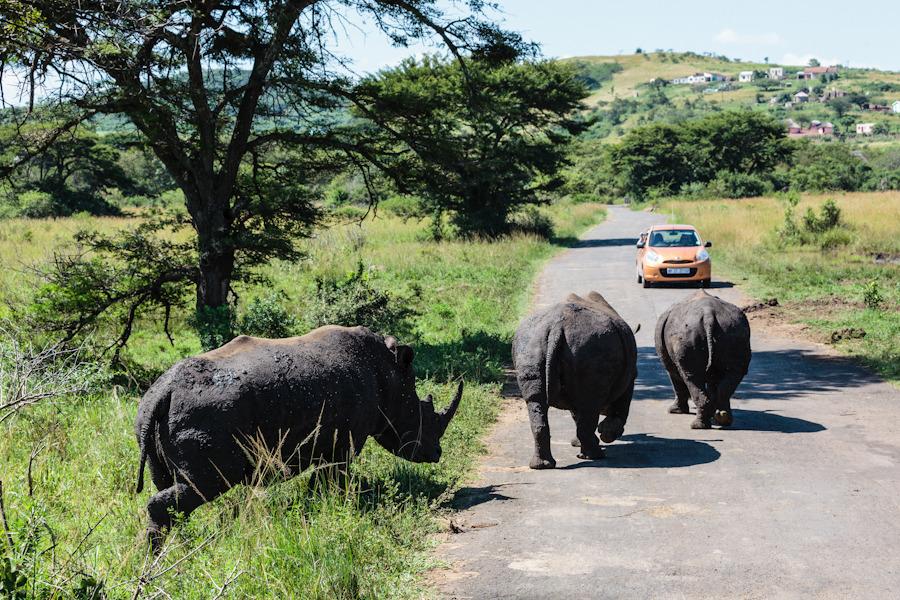 20120319_south_africa_0127.jpg
