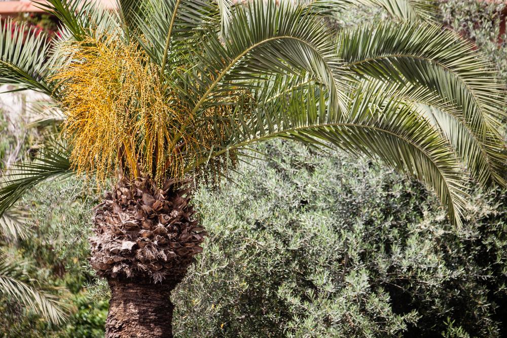 20120427_morocco_03742.jpg