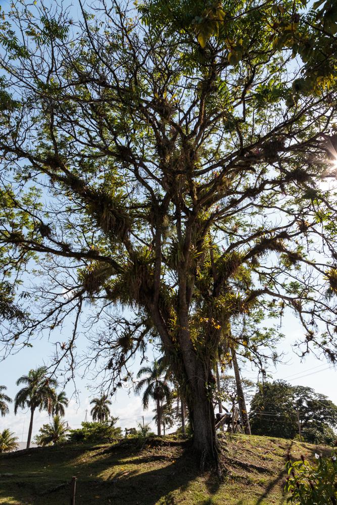 20130927_paramaribo_05406.jpg