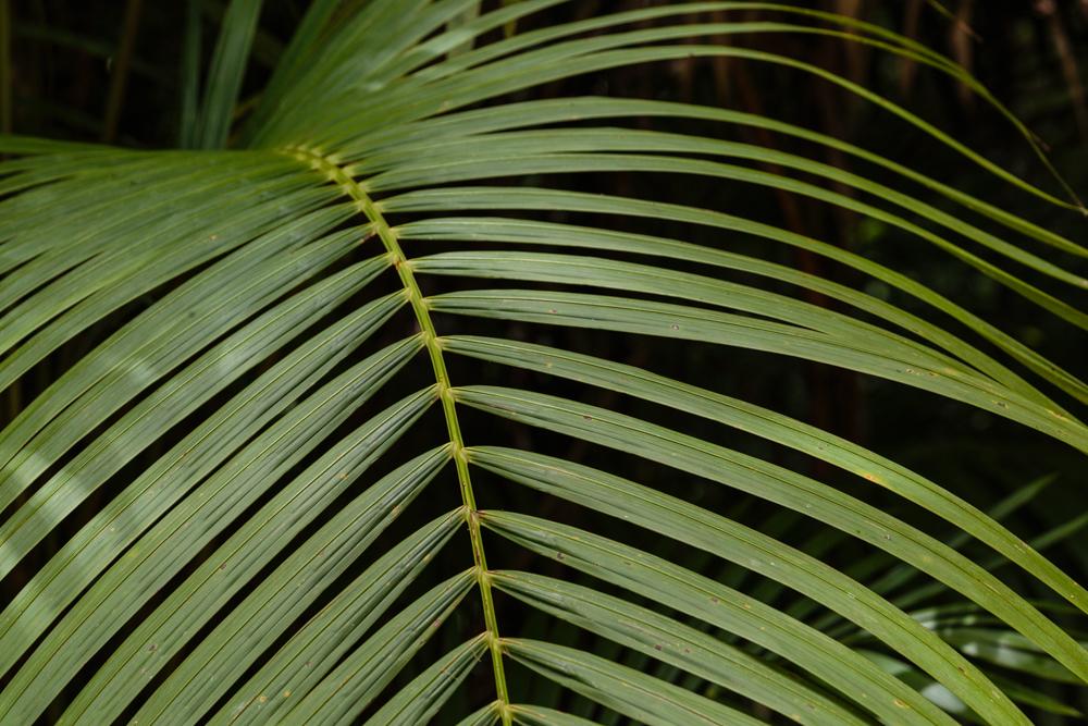 20130919_trinidad_00409.jpg