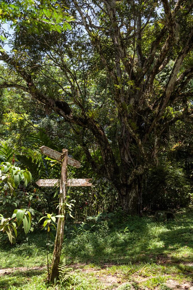 20130919_trinidad_00585.jpg