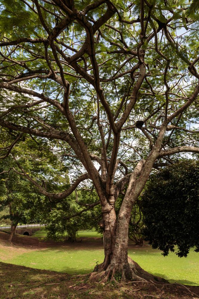 20130920_trinidad_02171.jpg