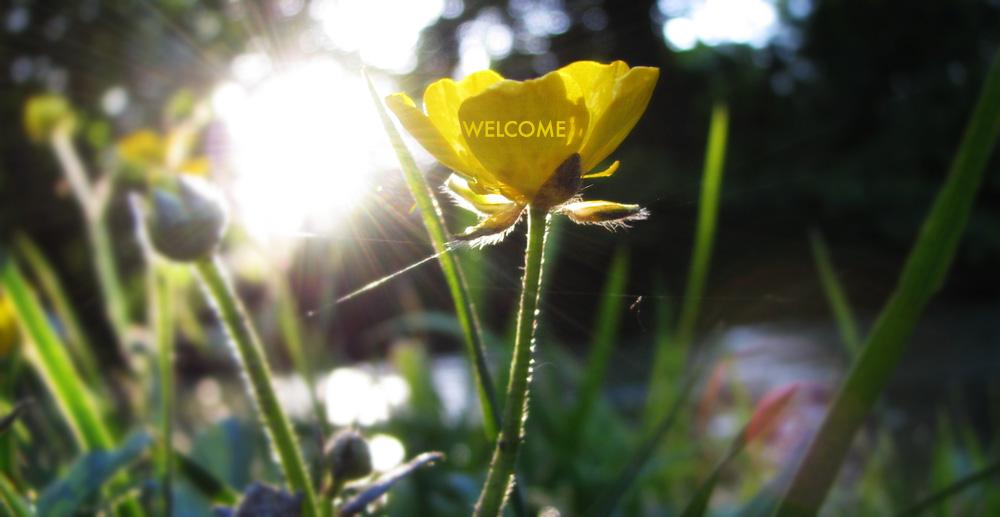 hero-flower.jpg