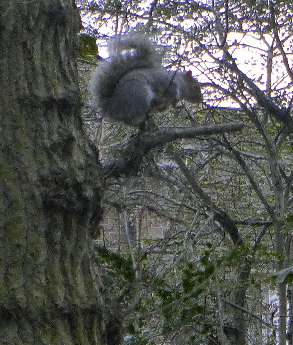 The squirrel loser watching the others steal his nuts.