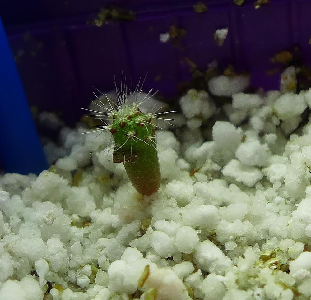 First Cactus 1.jpg