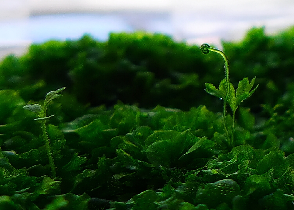 Ferns 4.jpg