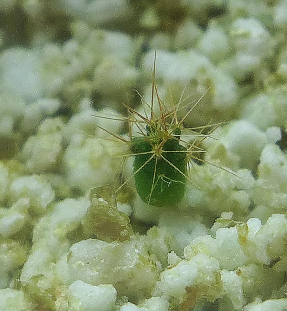 Cactus 1h.jpg
