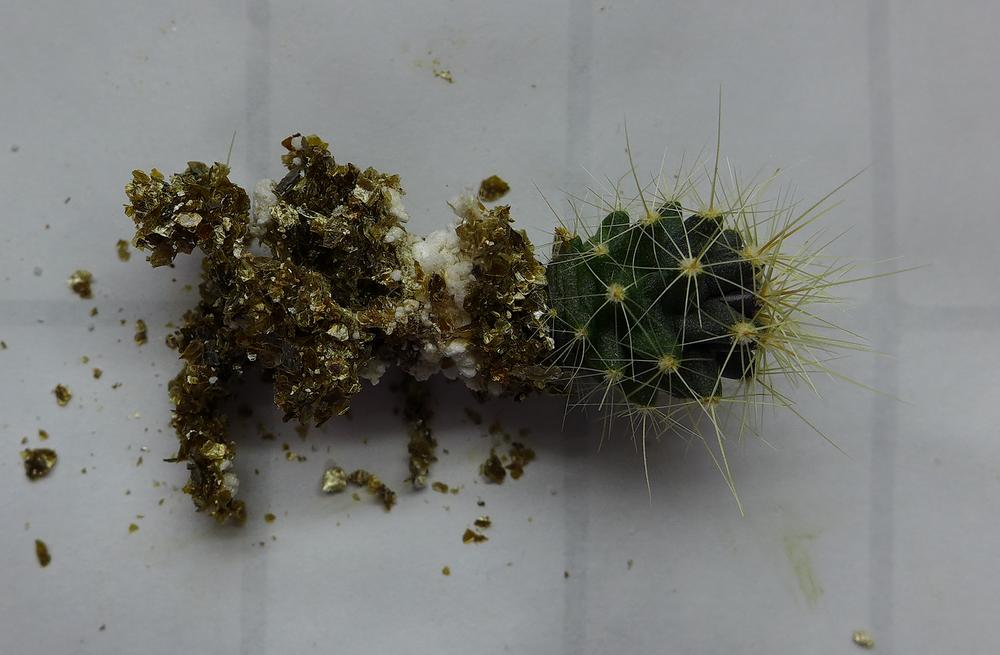 Pot 57 Cactus 230B Roots.png