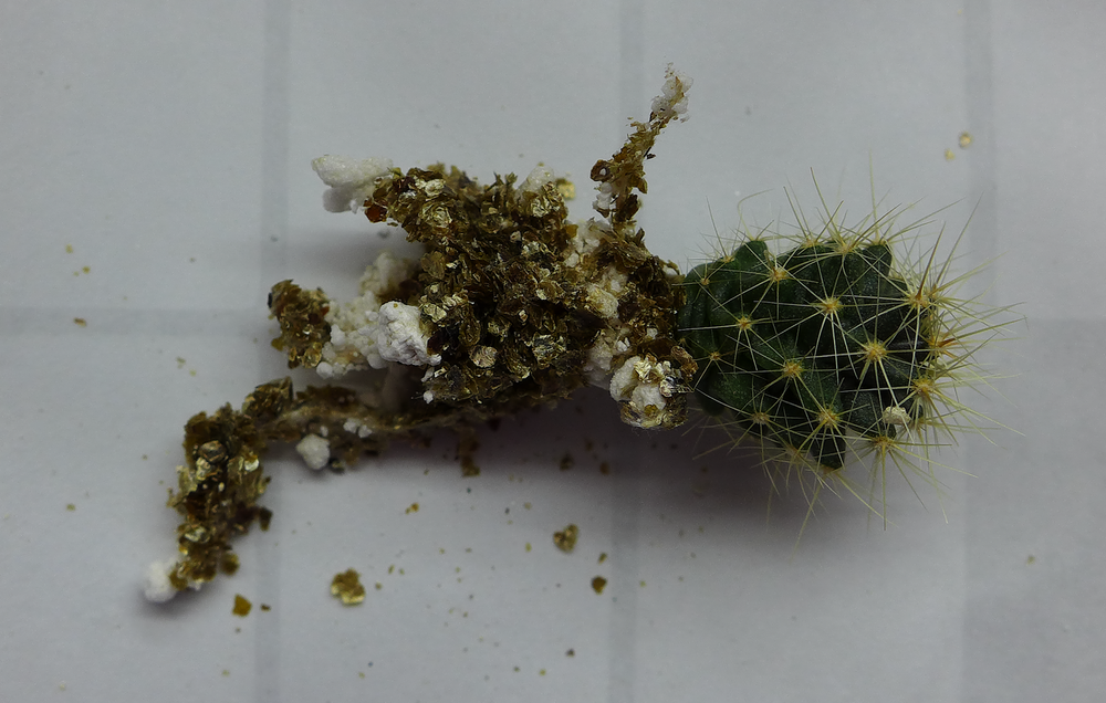 Pot 59 Cactus 230B Roots.png