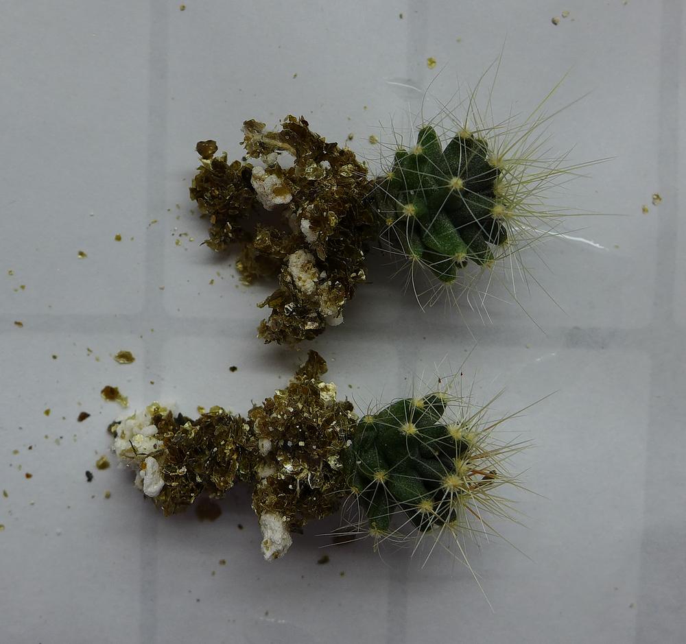 Pot 60 Cactus 230B Roots.png