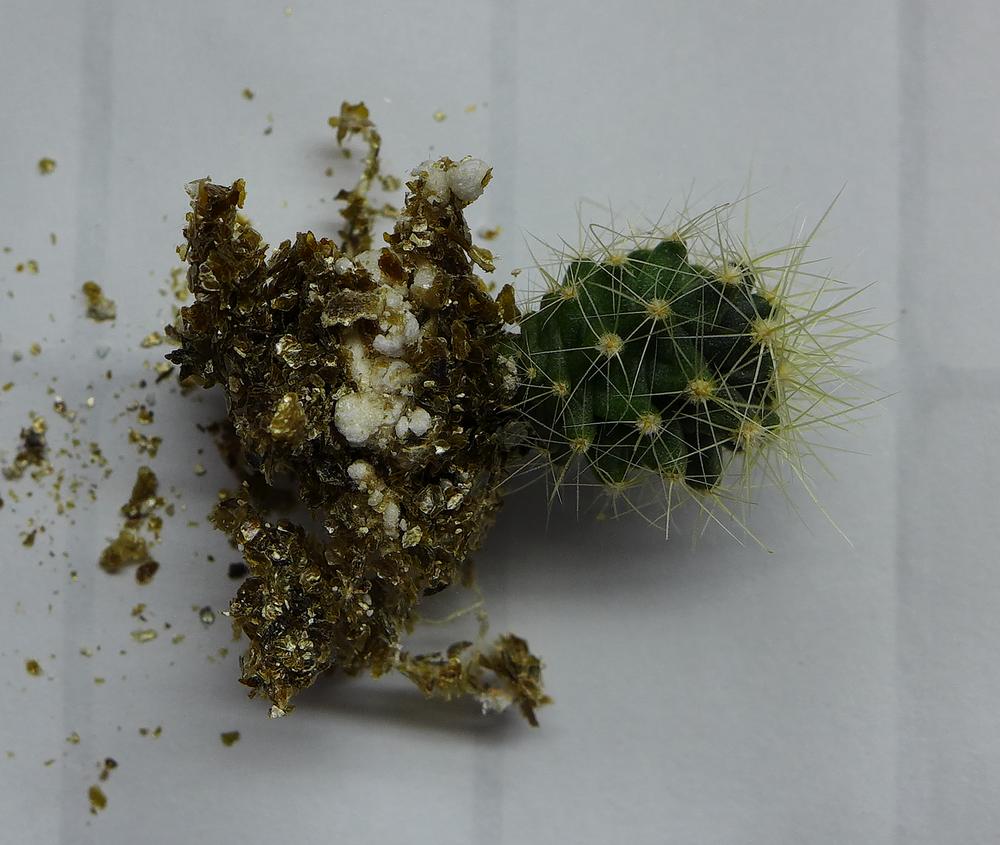 Pot 62 Cactus 230B Roots.png