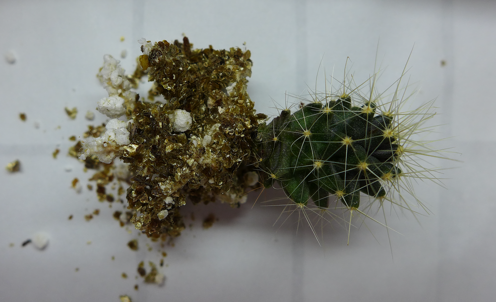 Pot 63 Cactus 230B Roots.png