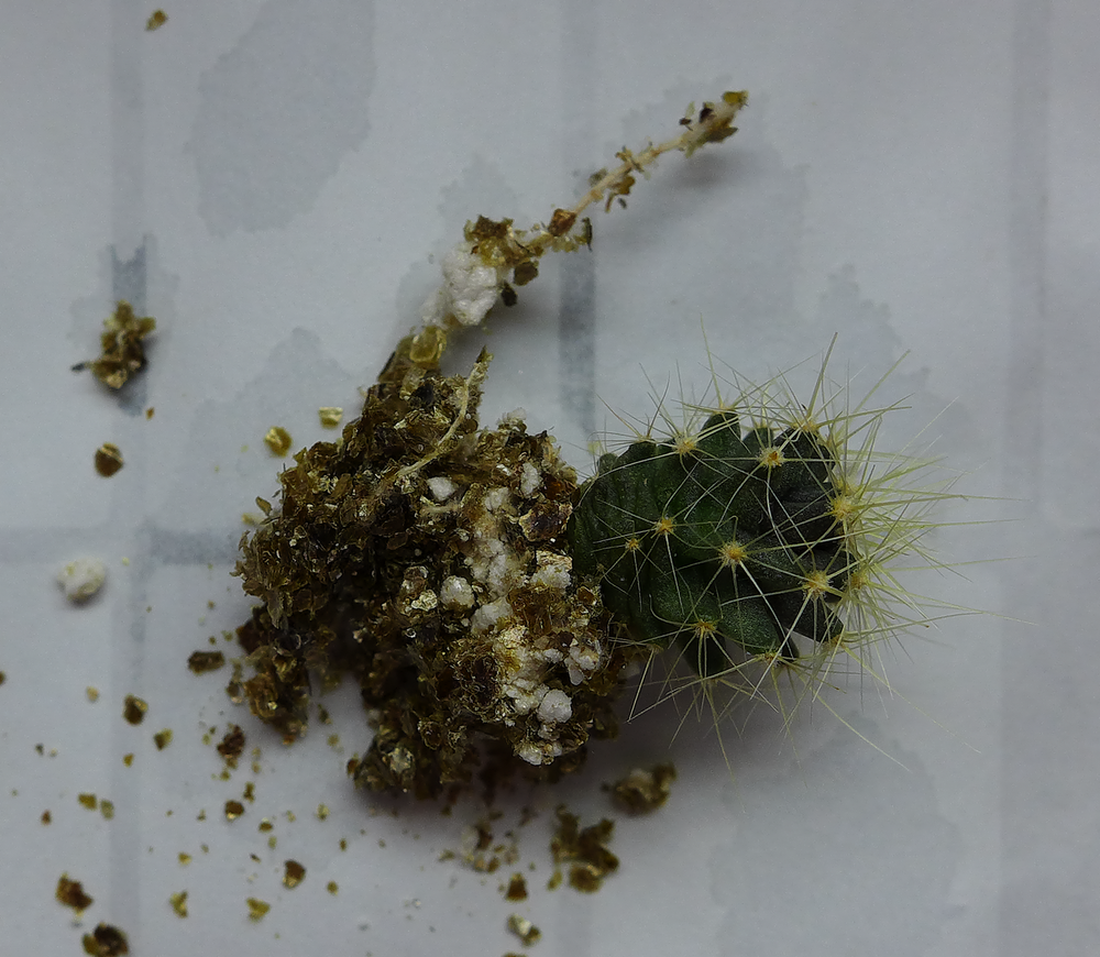 Pot 64 Cactus 230B Roots.png