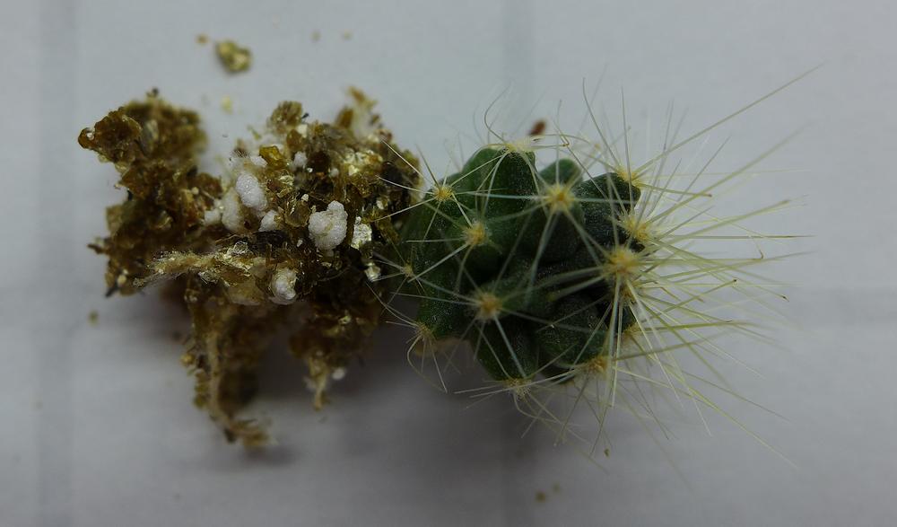 Pot 67 Cactus 230B Roots.png