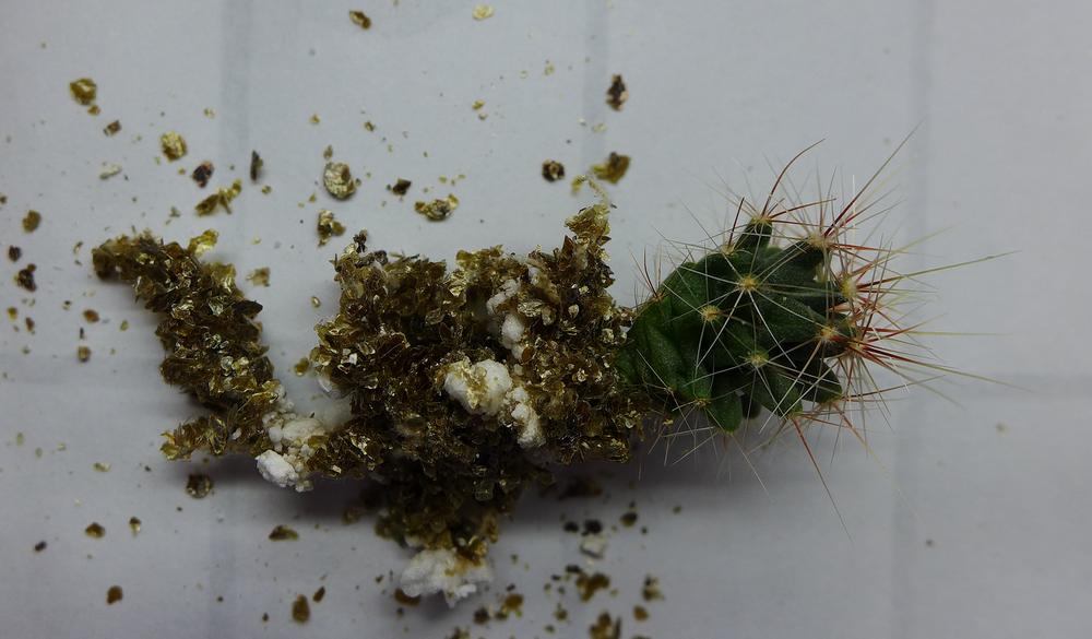 Pot 61 Cactus 230B Roots.png