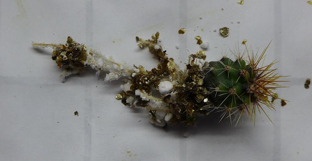Pot 69 Columnar Cactus Roots.png