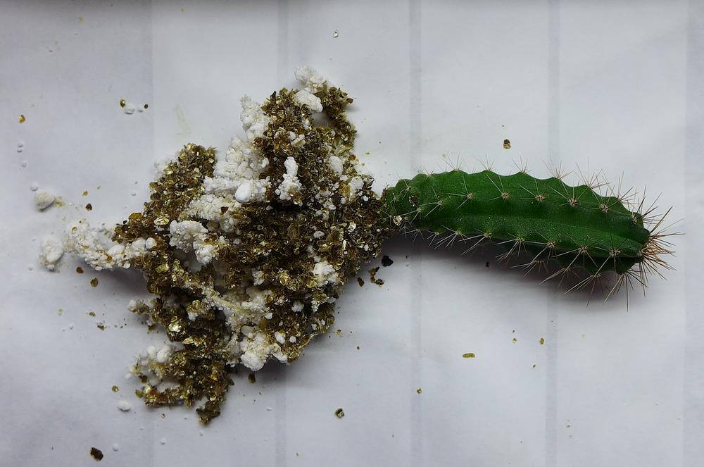 Pot 72 Columnar Cactus Roots.png