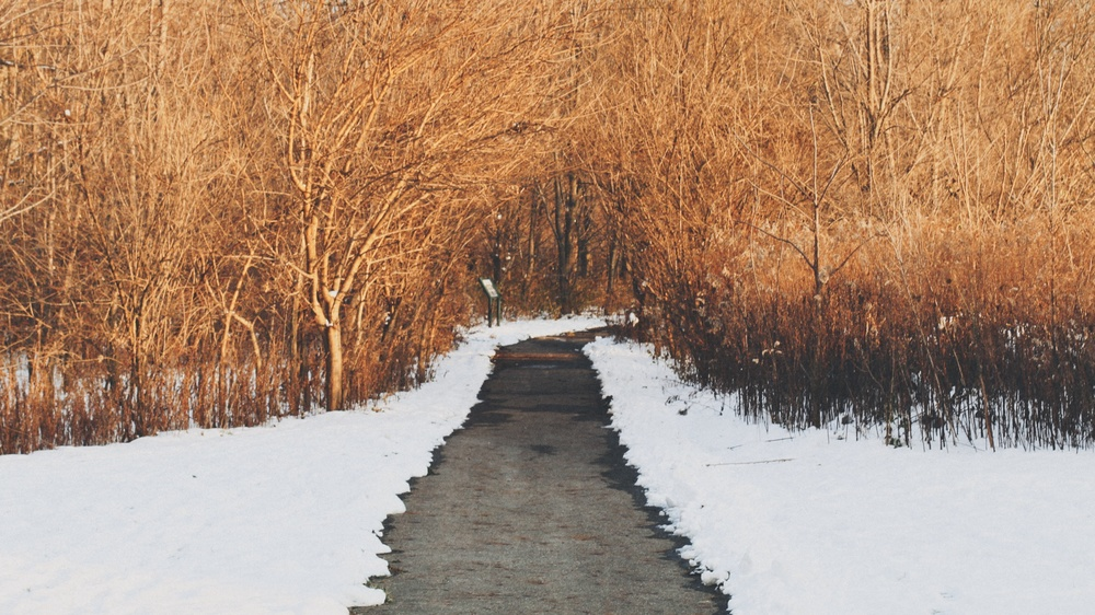 olentangy_trail.jpg