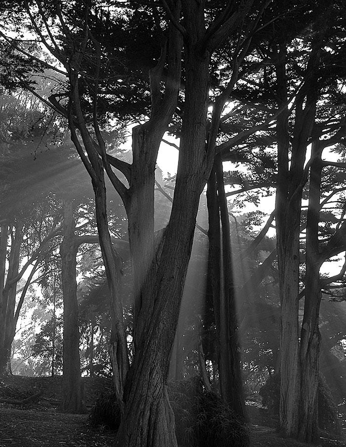 light_thru_trees2.jpg