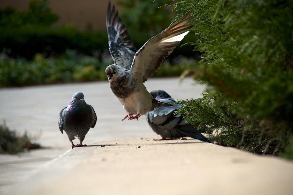 morning doves.jpg