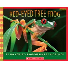 red-eyed%20tree%20frog.jpg