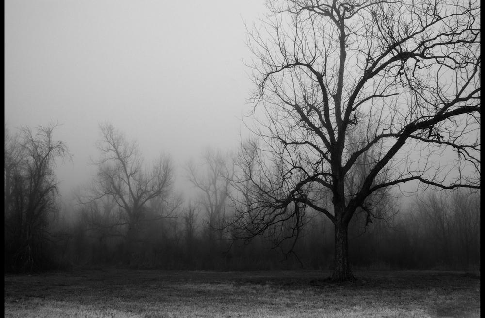 tallgrass-14.jpg