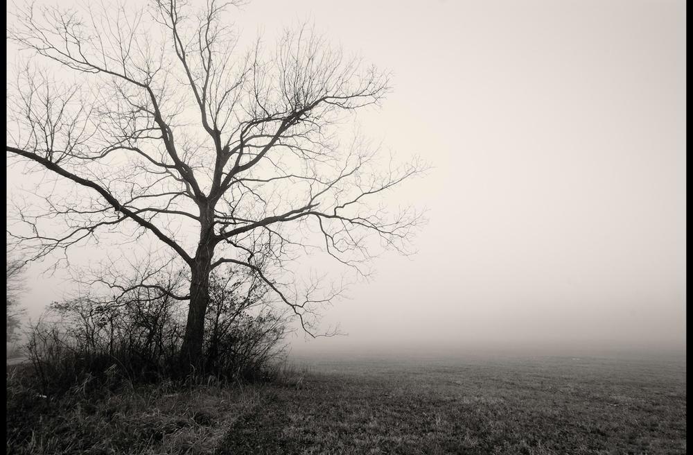 tallgrass-13.jpg