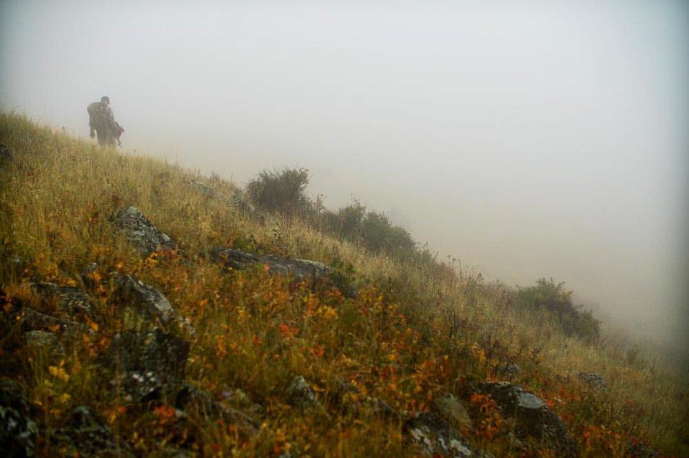Montana fog Elk hunt