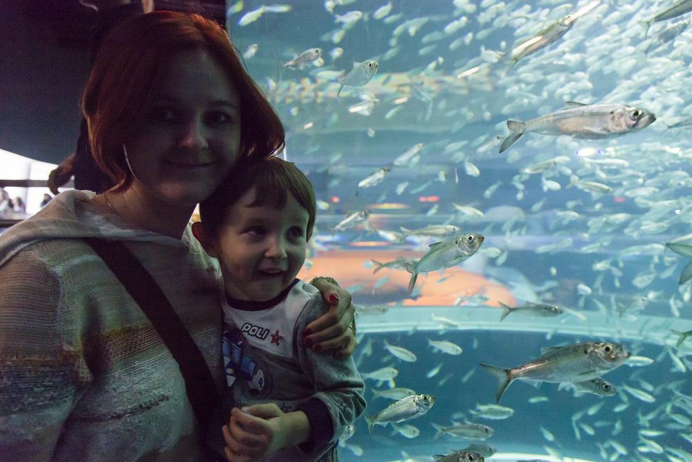 aquarium-002.jpg