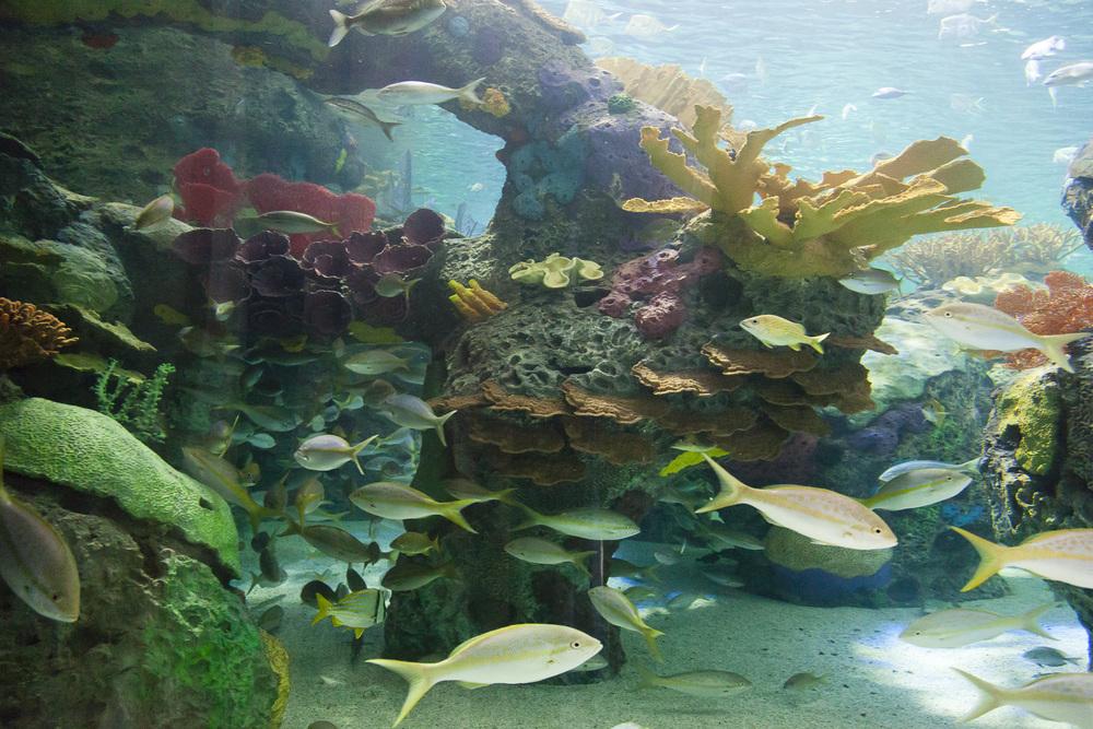 aquarium-005.jpg